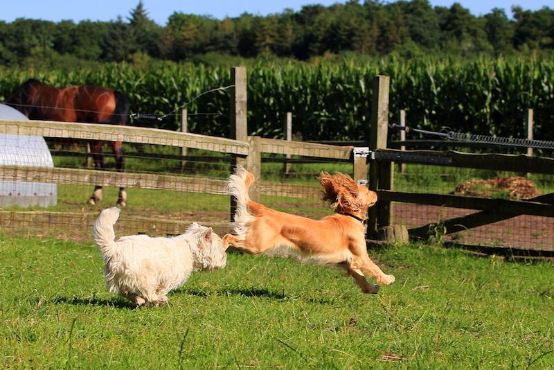 Hundepension - Kennel Roager - pensionshunde i leg i midterstykket 2.JPG