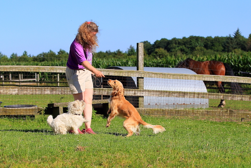 Hundepension - Kennel Roager - pensionshunde leger med Anita i midterstykket.JPG