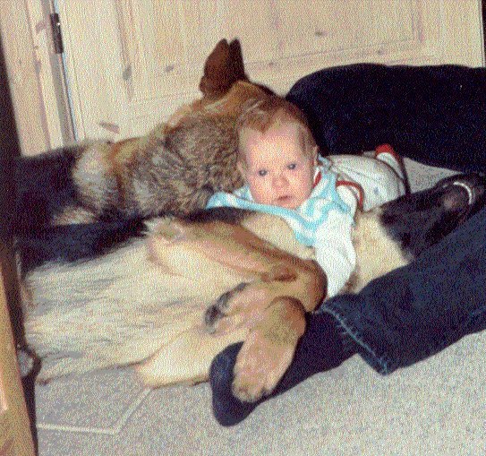 Helle som baby mellem schæferhunde.jpg
