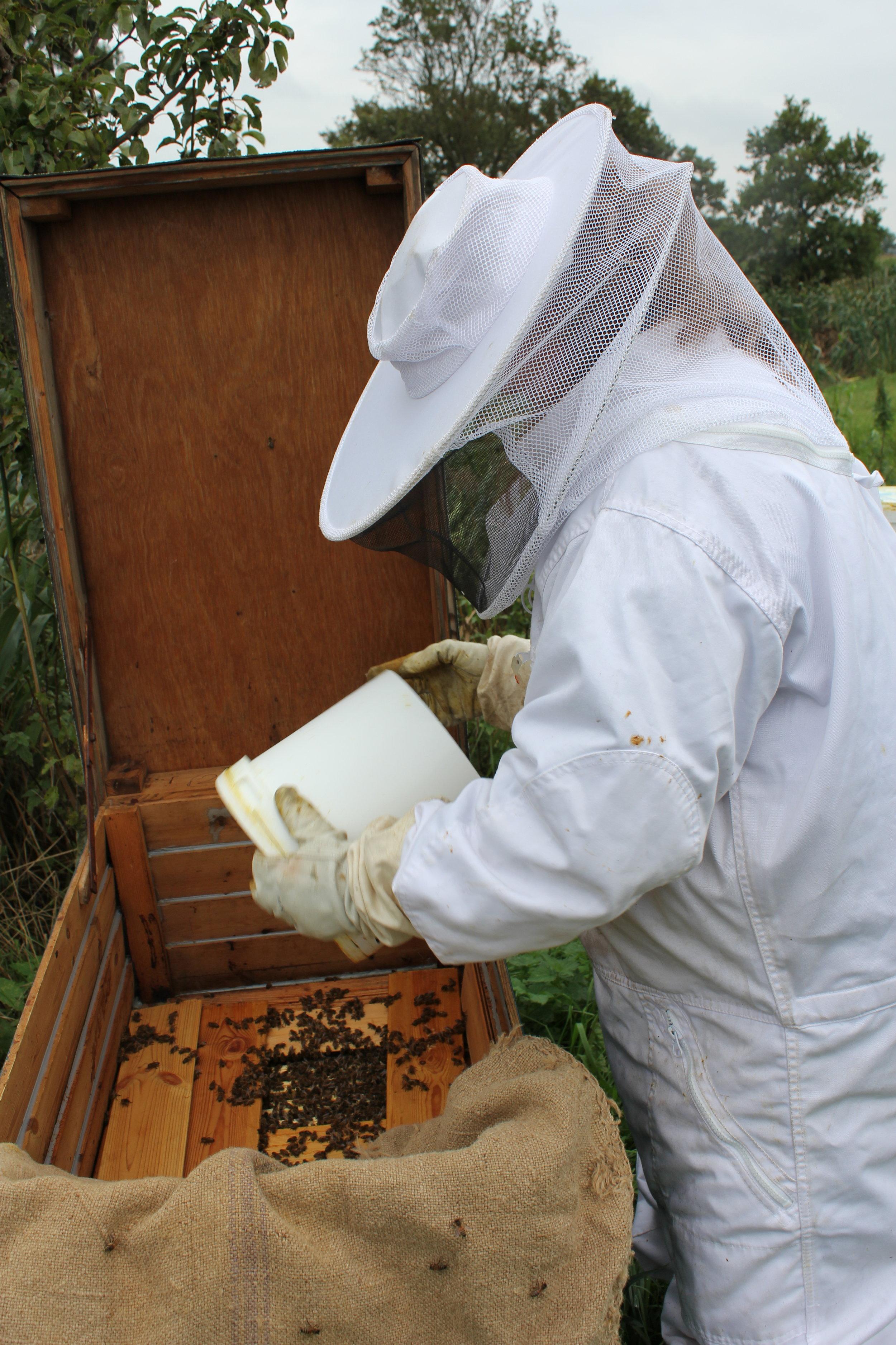 Vinterfodring i trugstade - erstatning for biernes honning.