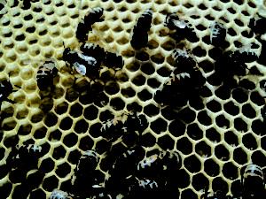 honningtavle1.jpg