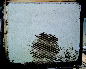 honningtavle2.jpg