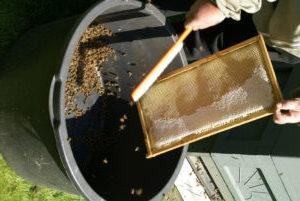 honningtavle3.jpg
