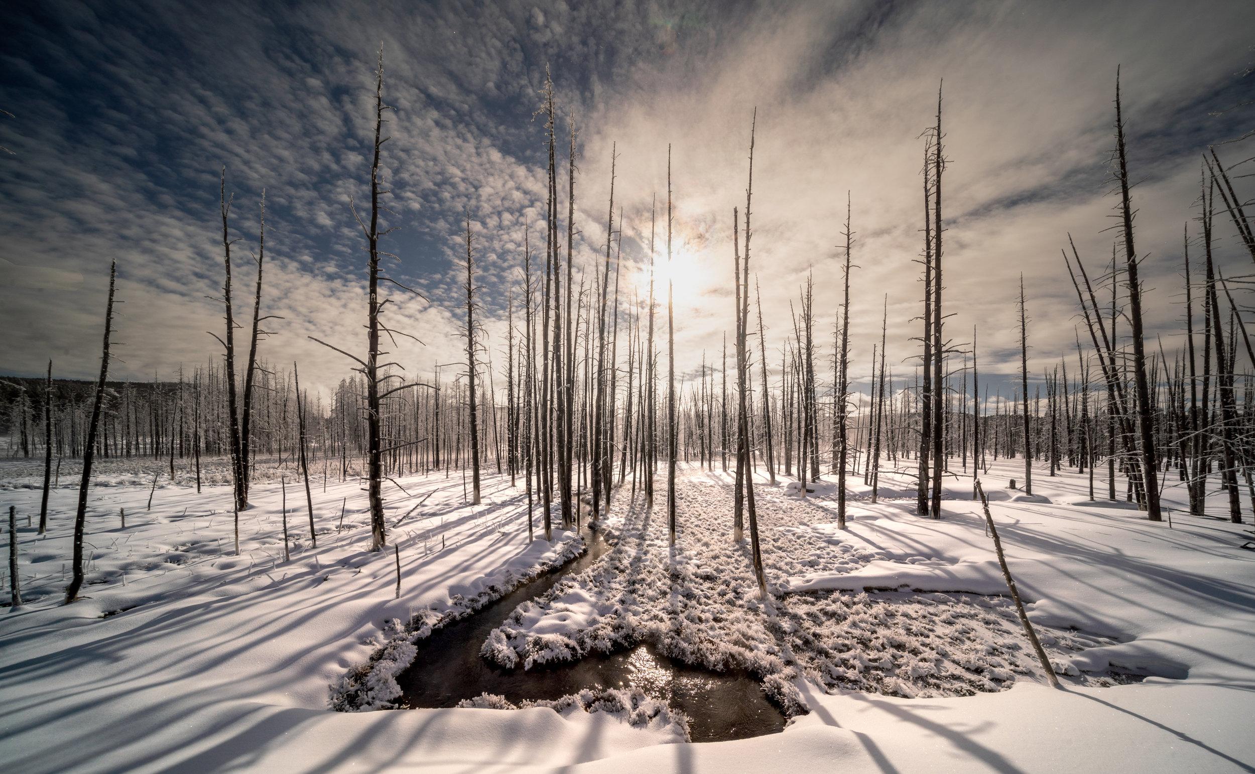 20190302_YellowstoneMckay_T_A08145.jpg