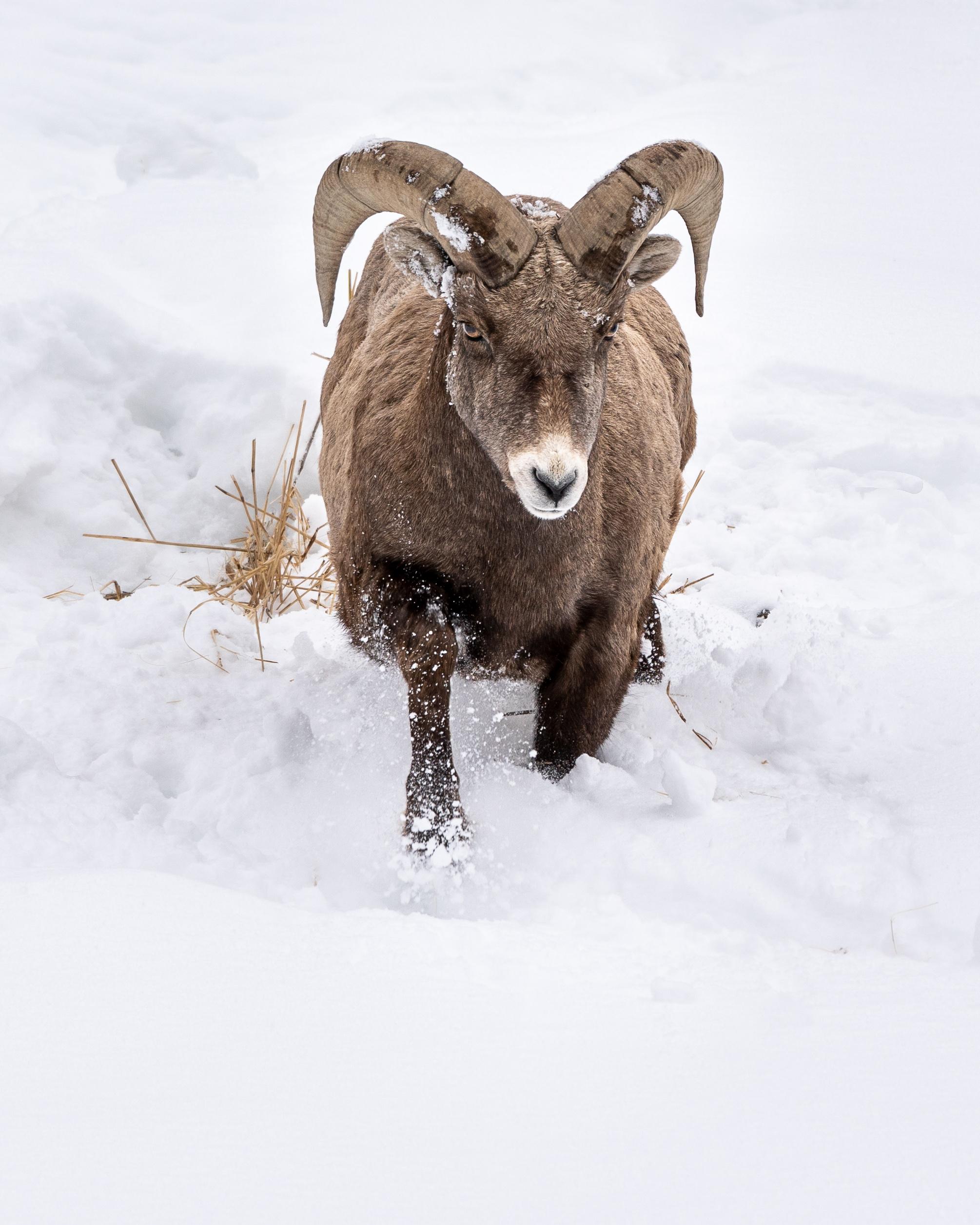20190301_YellowstoneMckay_T_A08071-Edit.jpg