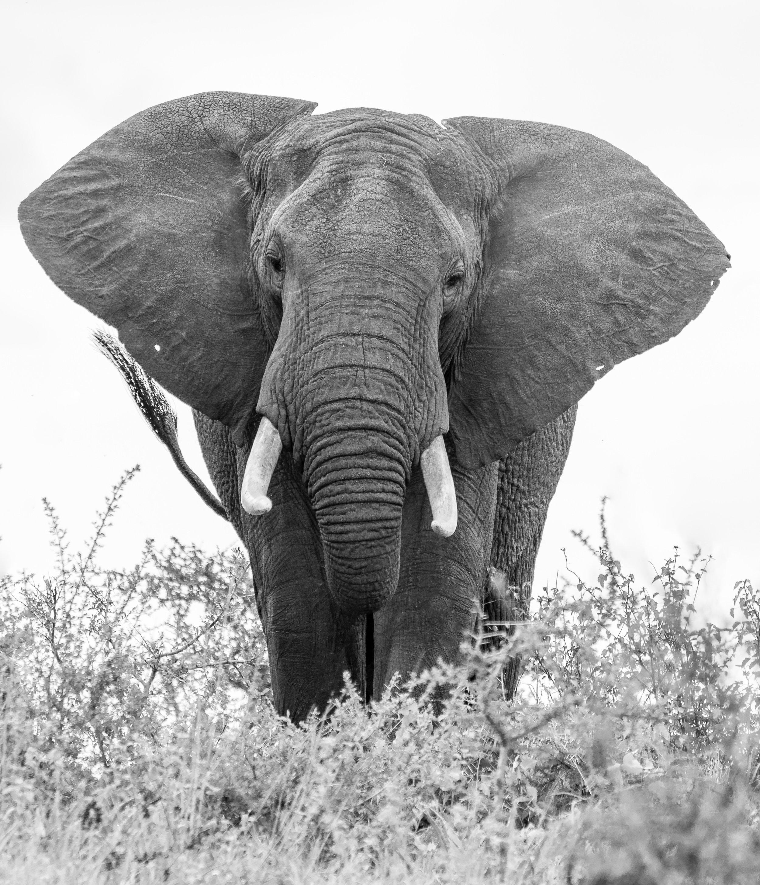 2018-03-12 Safari Day 3_20180312-safari-T_A01444-Edit.jpg