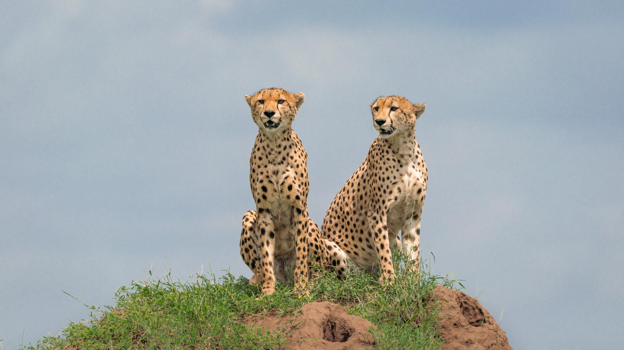 2018-03-13 Safari Day 4_20180313-safari-T_A01795.jpg