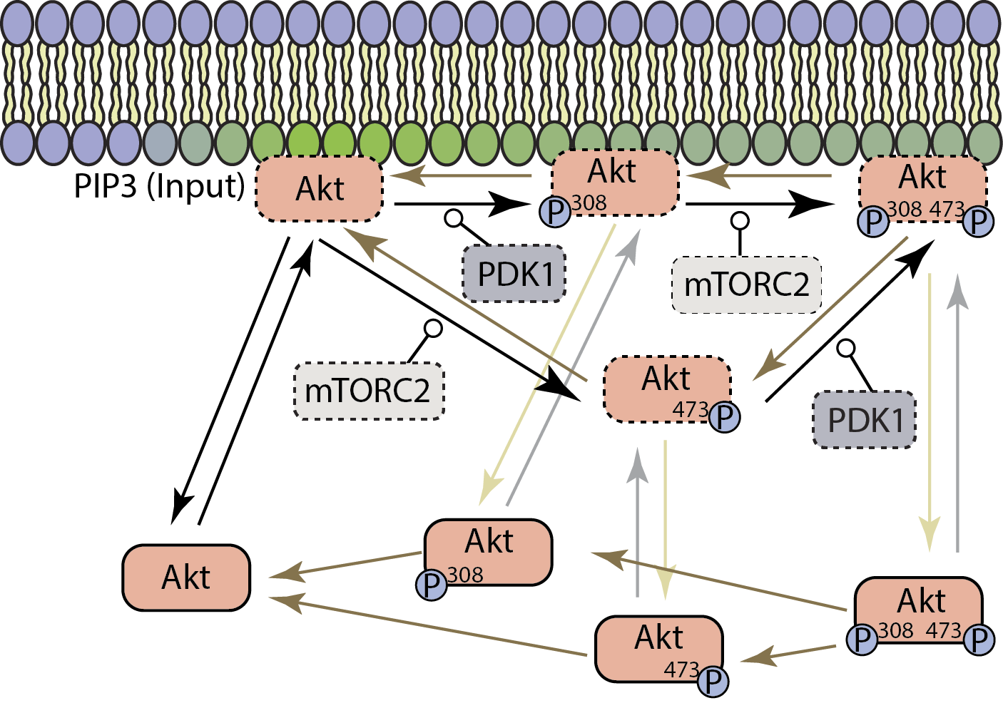 Figure_1_Dynamic_Modelling.png