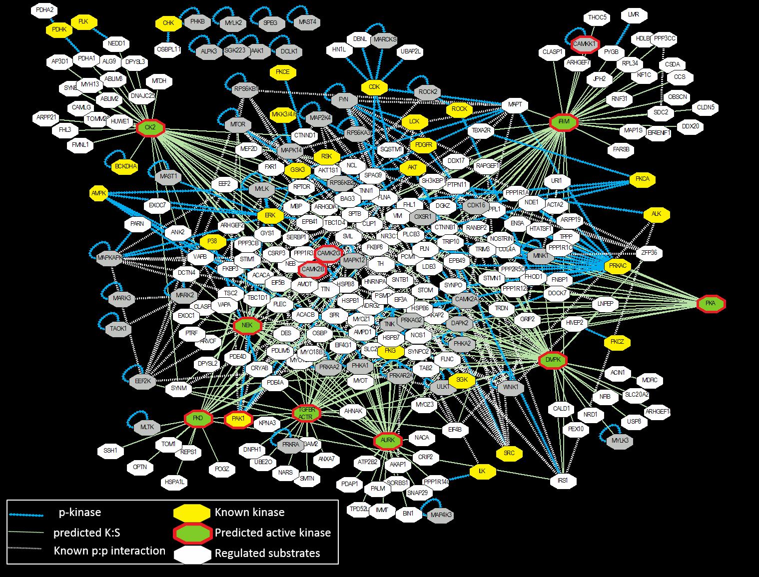Fig_Molecular_Networks_2.png