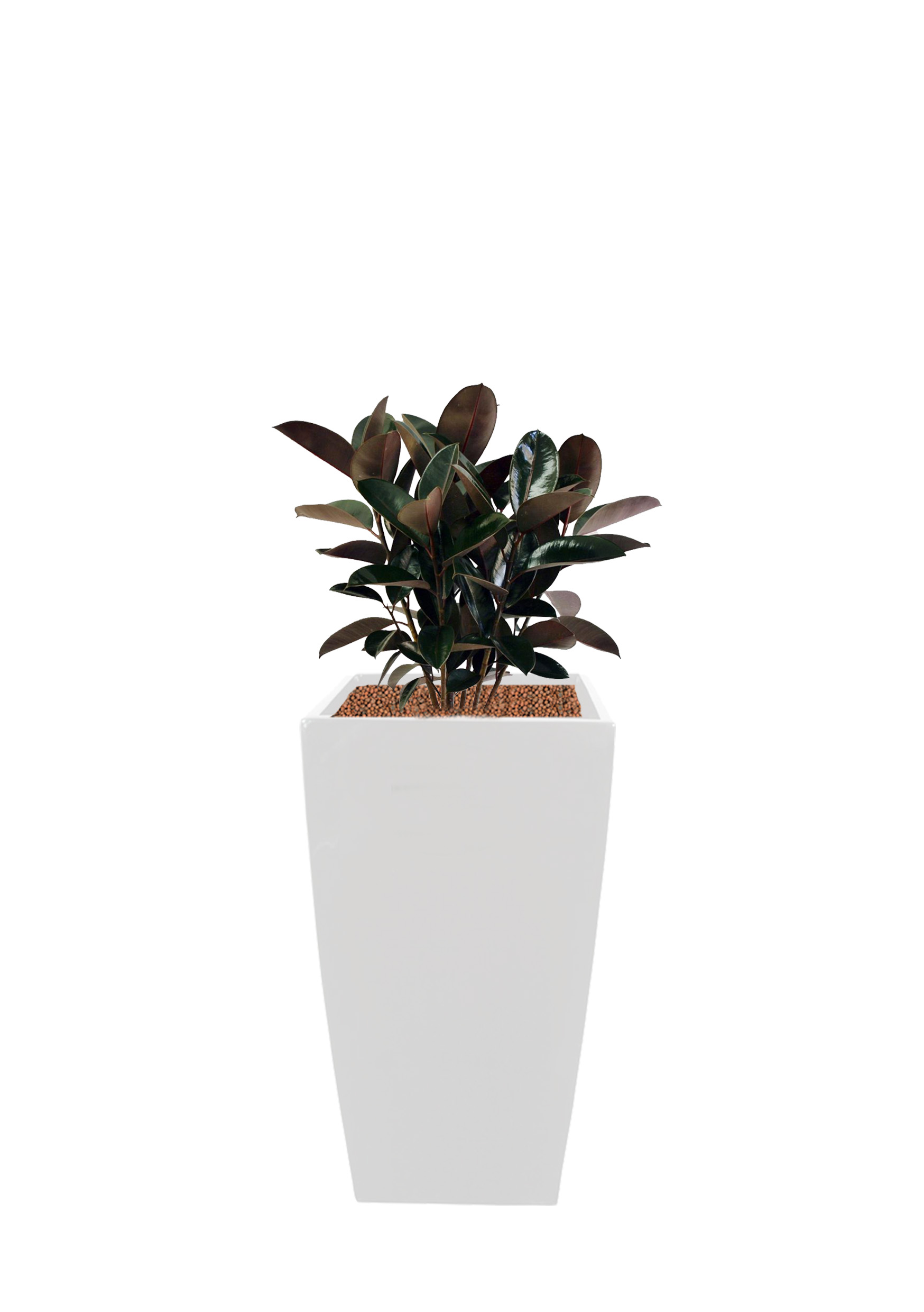 Category D - $22.00 inclusive of plants, pots and maintenance