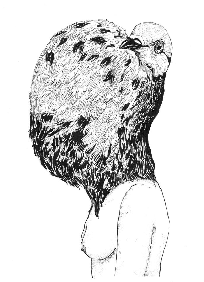 Darwin's Pigeons pt 2 - Copic Pen & Pental Ink Brush, 2017