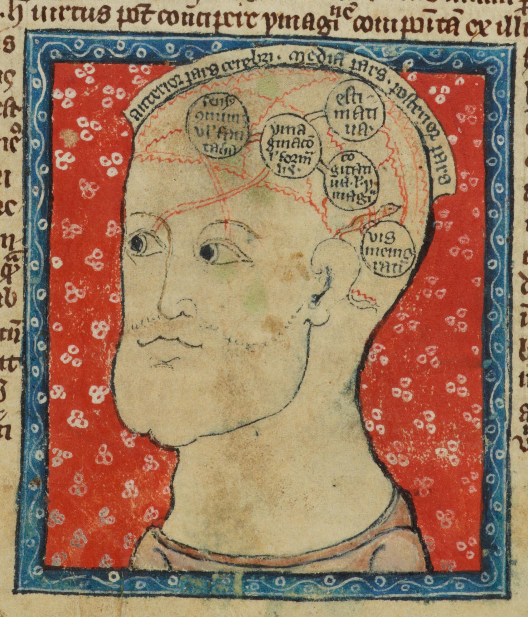 The Medieval Brain