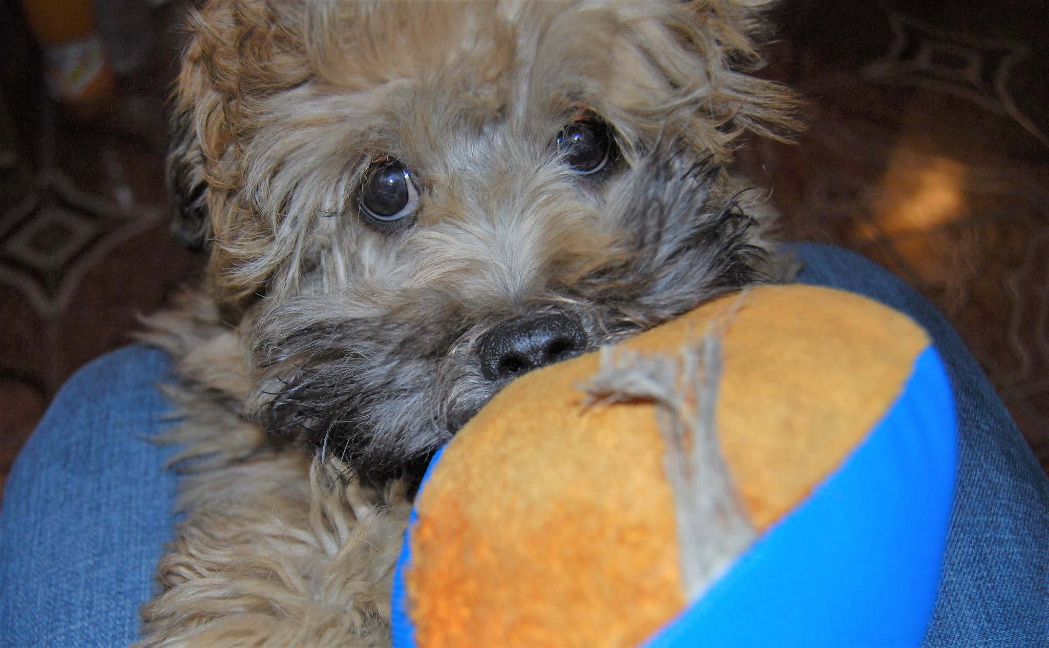 """Grab ball and attempt to keep possession, using the """"puppy eyes"""" strategy…"""