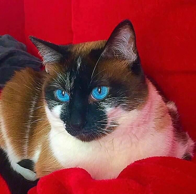 cat-phoebe.jpg