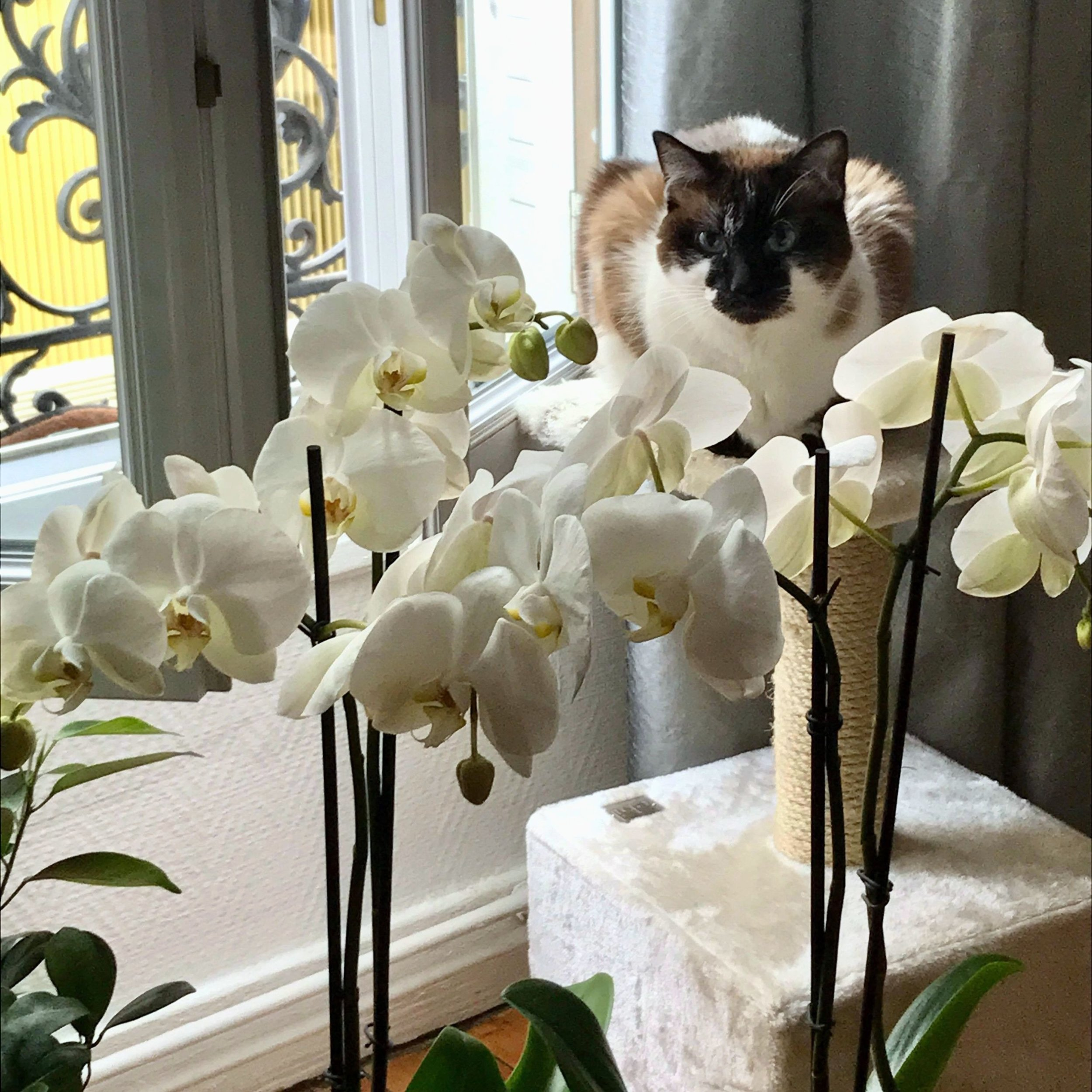 cat-phoebe-1.jpg