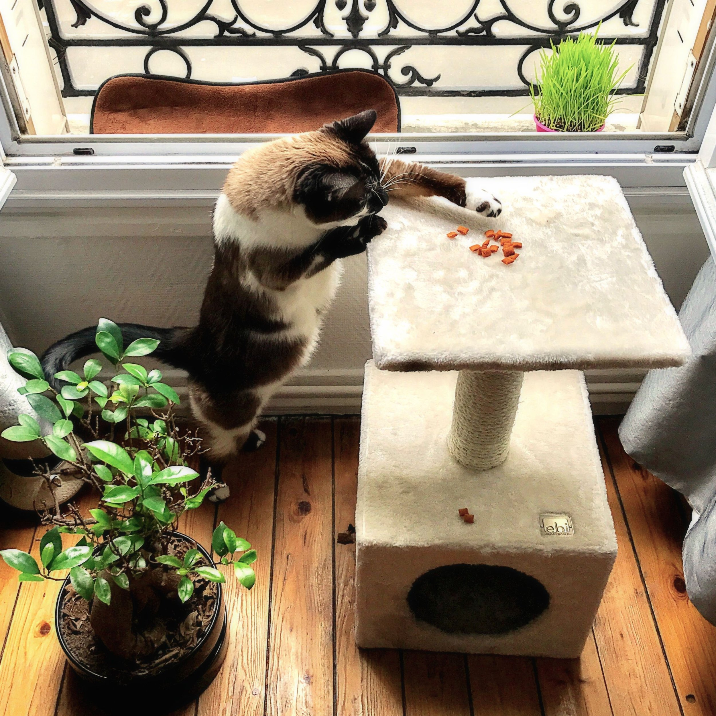 cat-phoebe-2.jpg