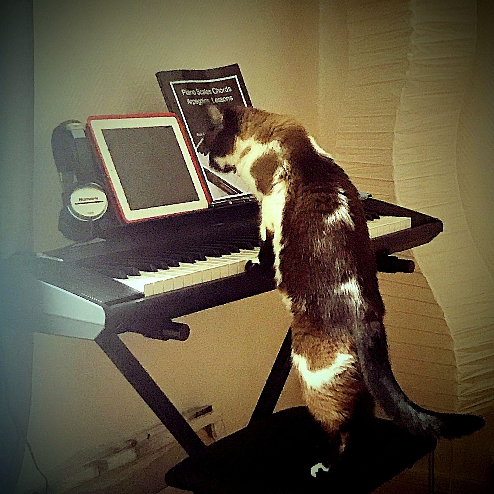 cat-phoebe-3.jpg