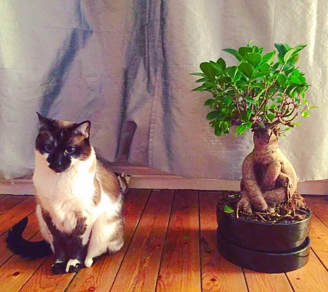 cat-phoebe-5.jpg