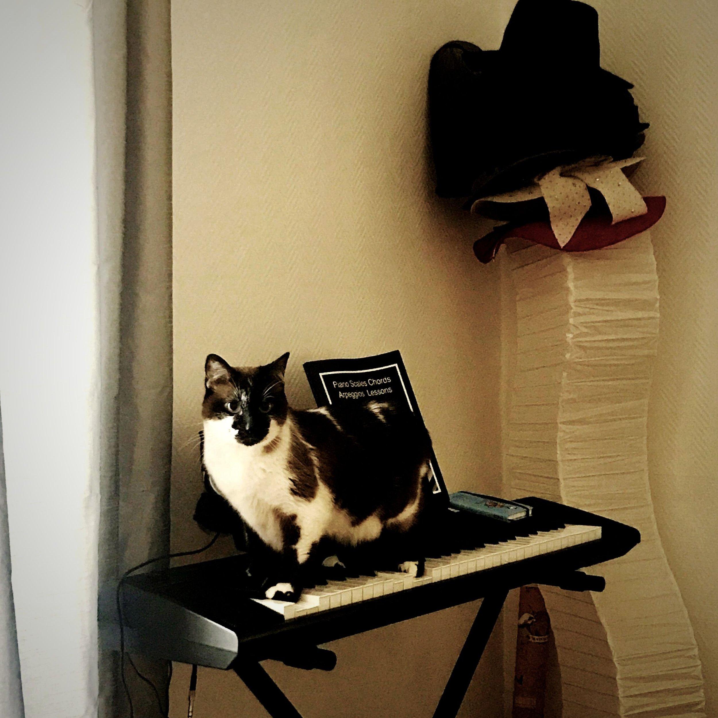 cat-phoebe-4.jpg