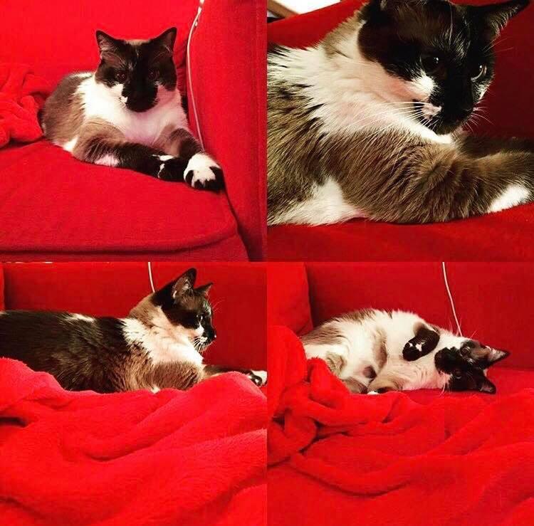 cat-phoebe-6.jpg