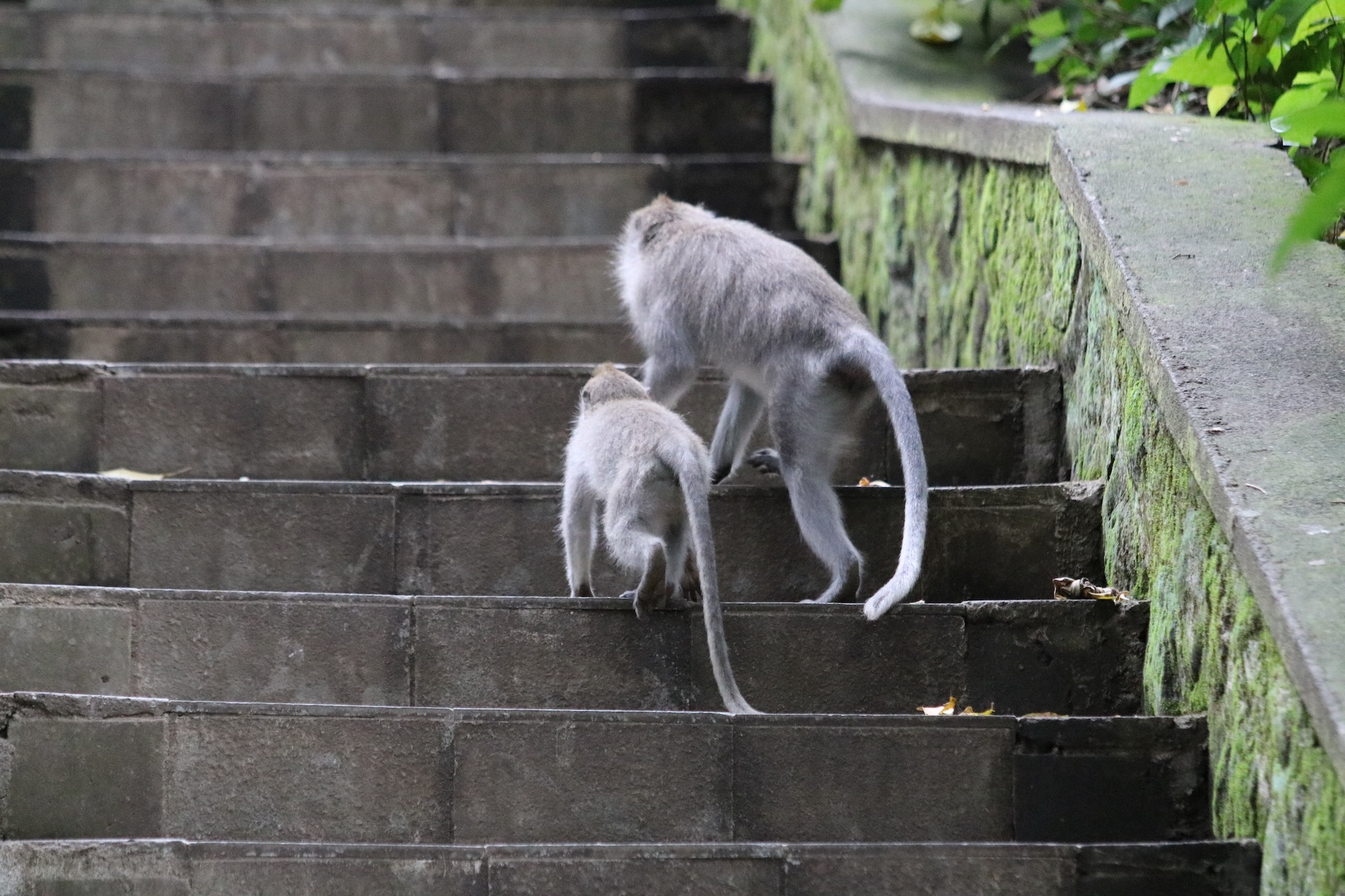 monkey-forest-temple-3.jpg