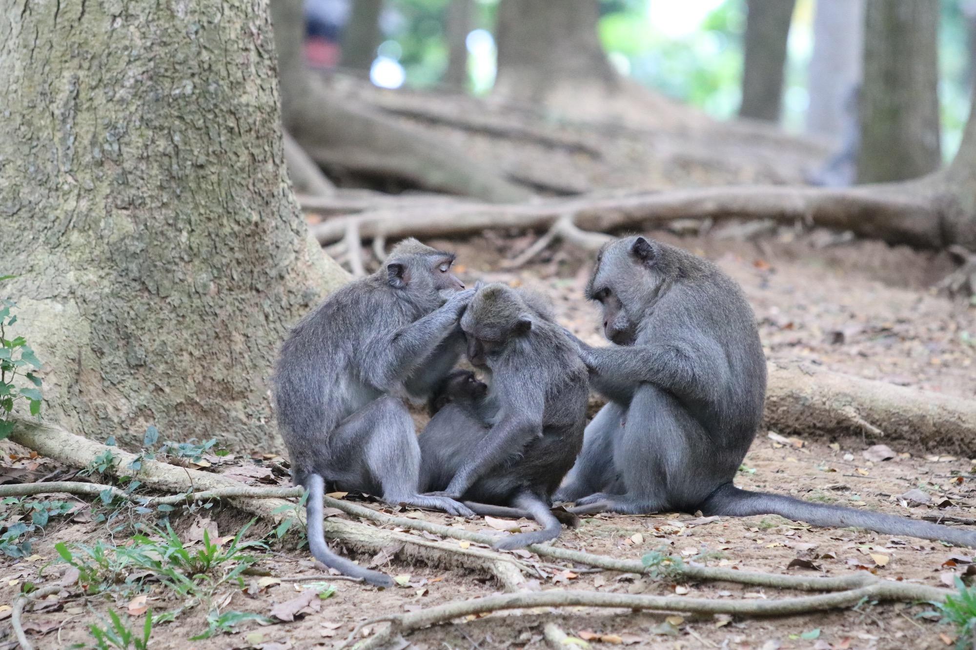 macaque-family-2.jpg