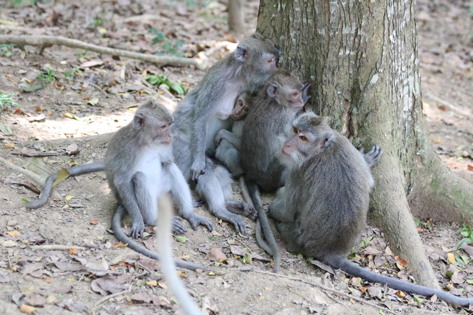 macaque-family-3.jpg