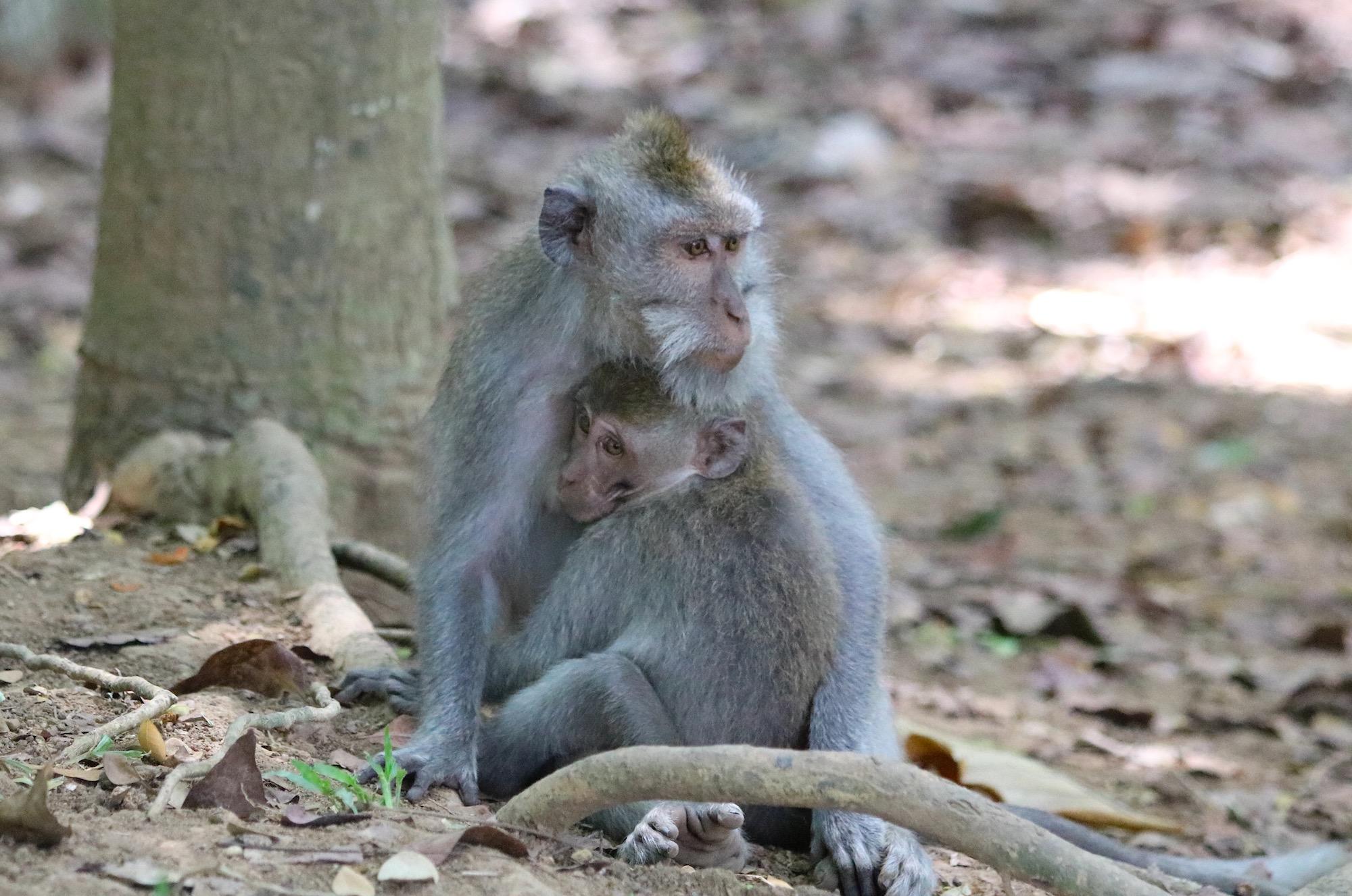 macaque-family-5.jpg