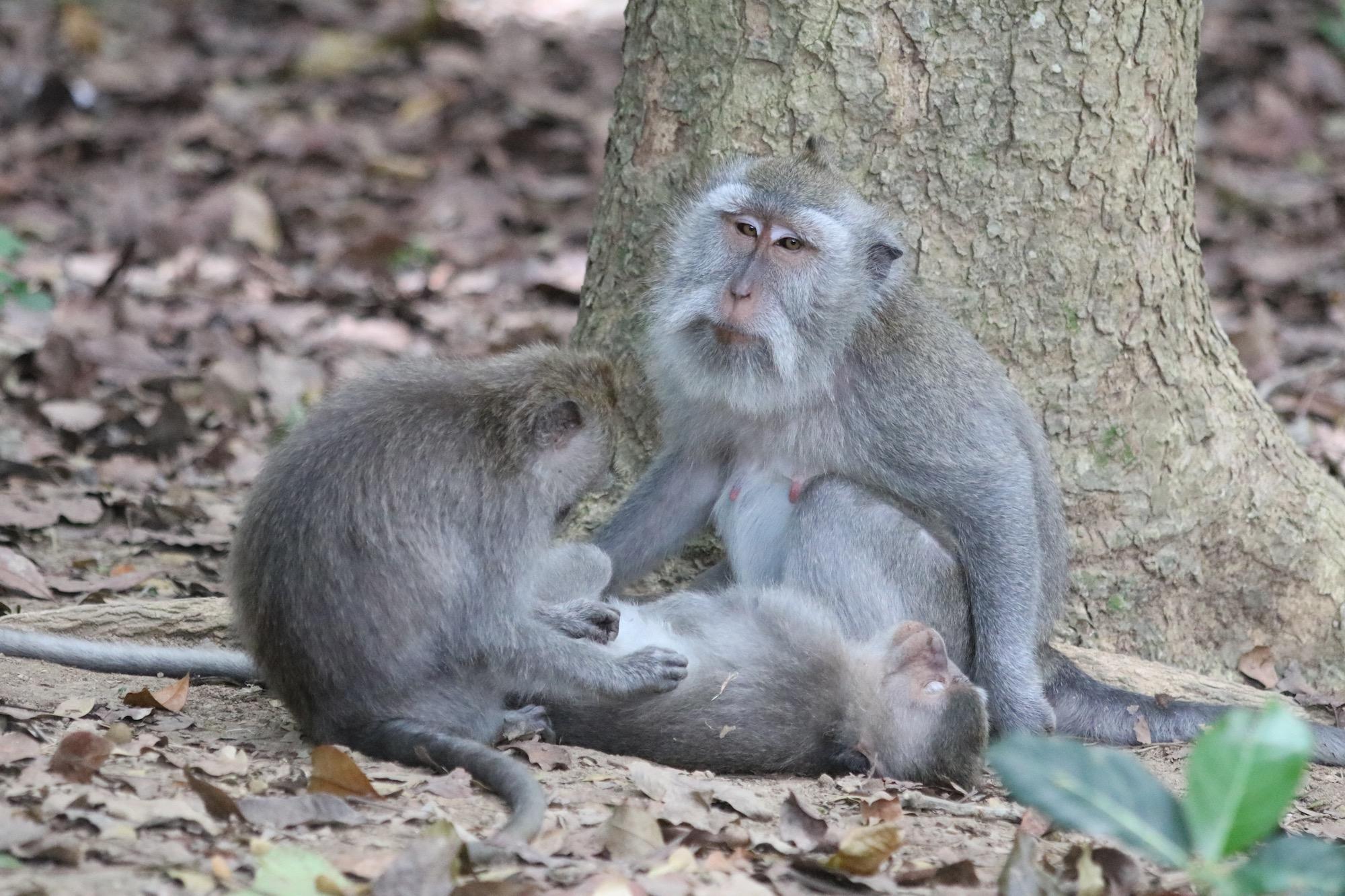 macaque-family-6.jpg