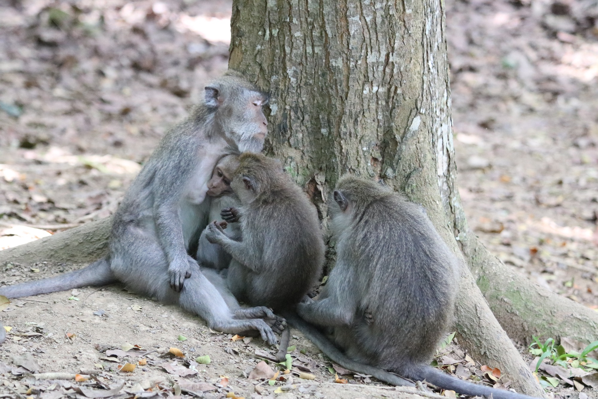 macaque-family.jpg