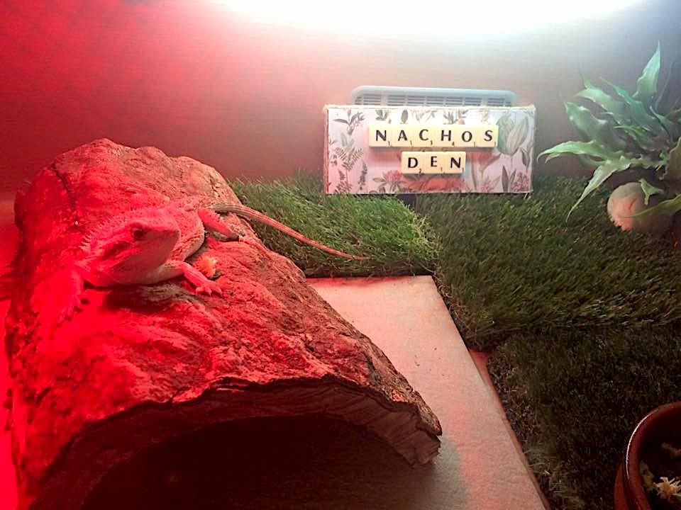 Nacho's Den