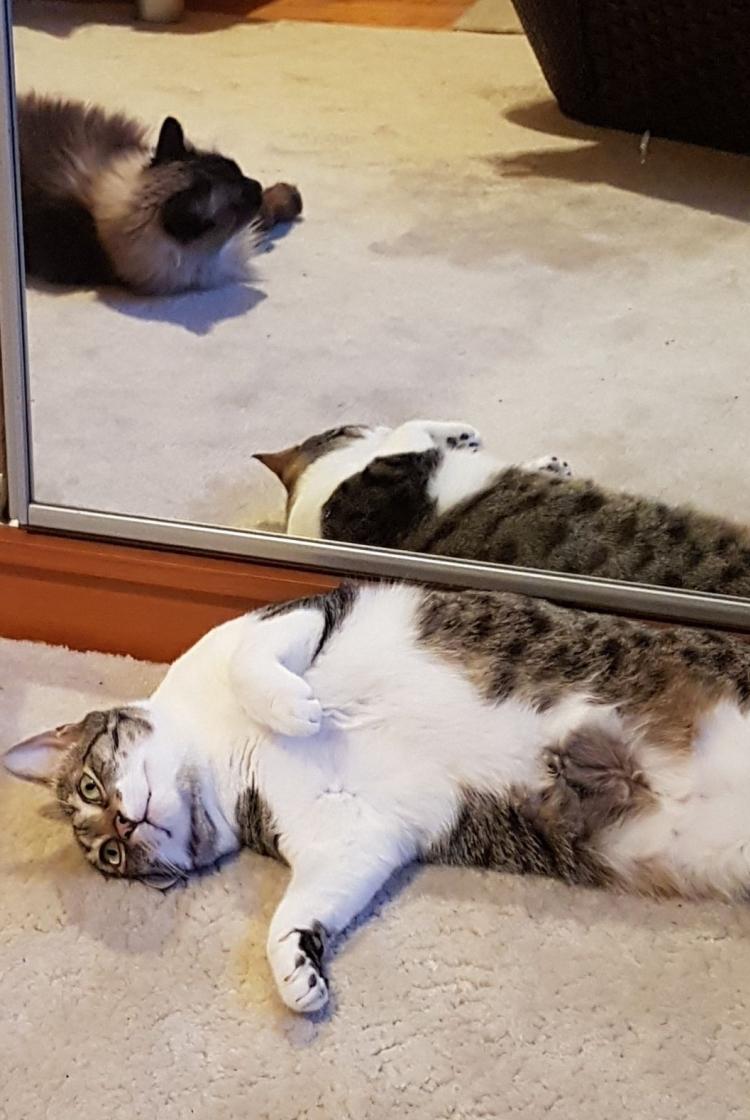 cat-tommy_10.jpg