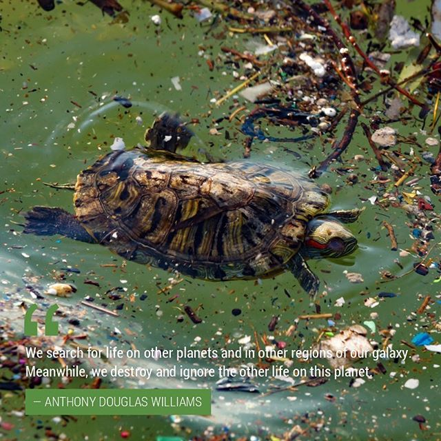 Turtles have been on Earth for 300 million years whereas the evolution of humankind can be traced back to only 2.5 million years ago. We all love turtles, yet we do not acknowledge their life and instead we cover them with petroleum, chemicals and plastic. #earthday #happyearthday #EndPlasticPollution  #plastic #earthday2018 #pollution #savetheplanet #saynotopollution #instaearthday #instanature #climate #climatechange #picoftheday #wilderness #trees #oceans #wildlife #wildanimals #water #oceans #nature #ecowatch ‪#ActOnClimate‬ #savetheturtles #turtle #petsofchampions #turtles