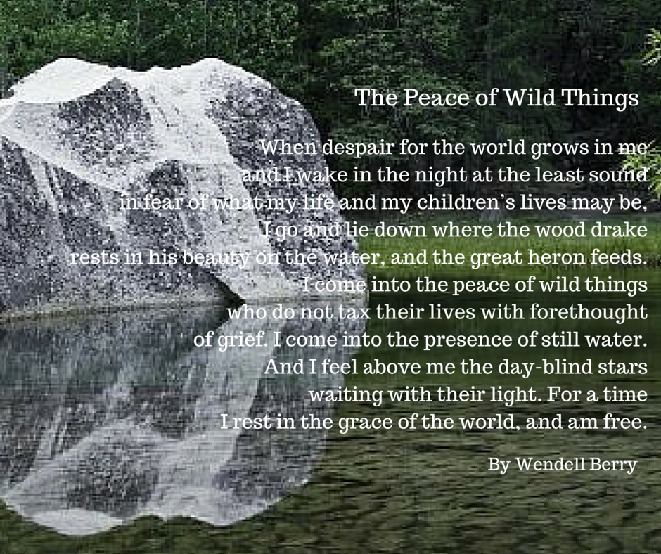 The Peace of Wild ThingsBY WENDELL BERRY.png