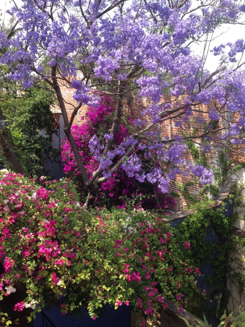 CC - flowers.jpg