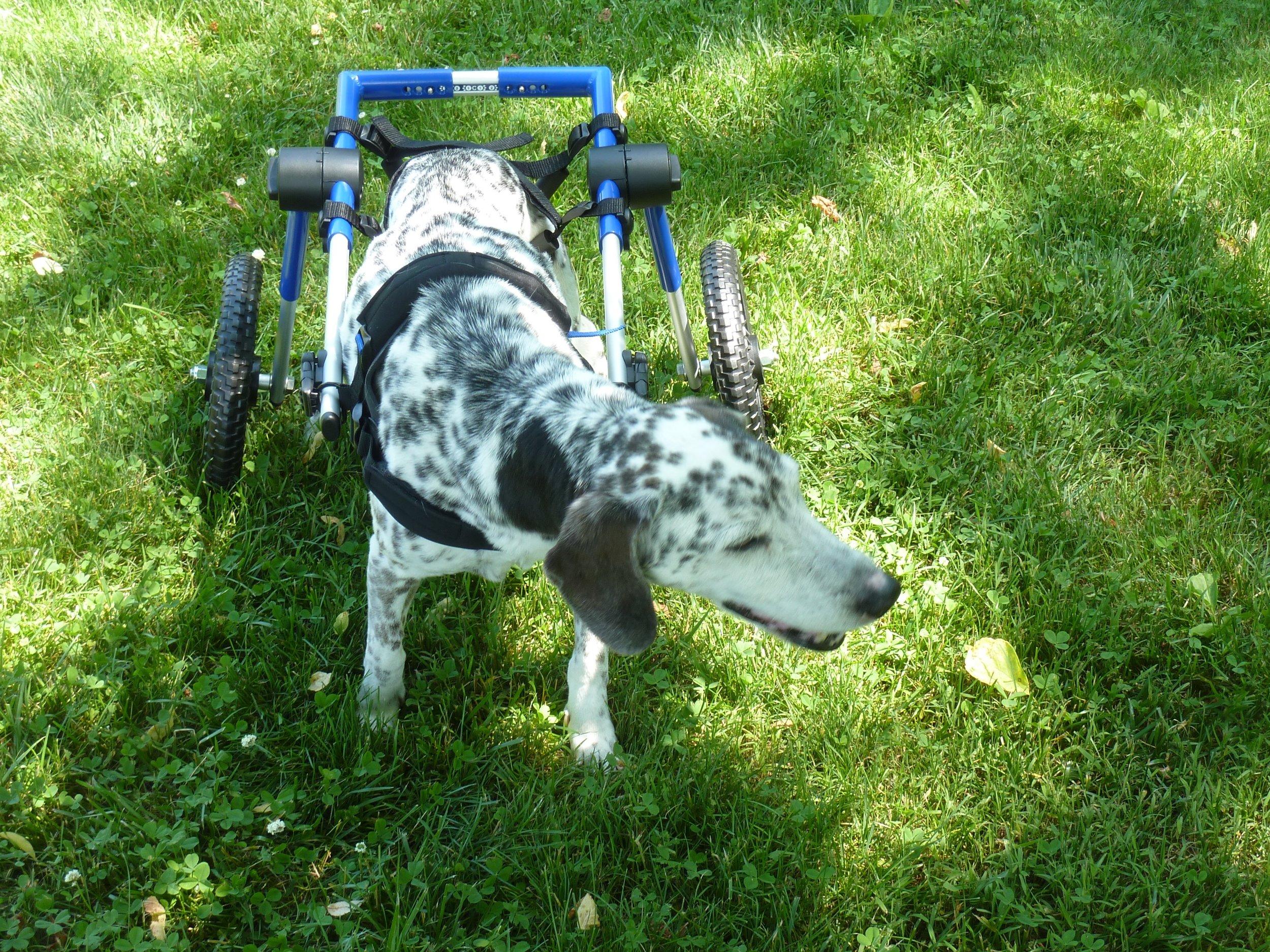 fred_wheelchair.jpg