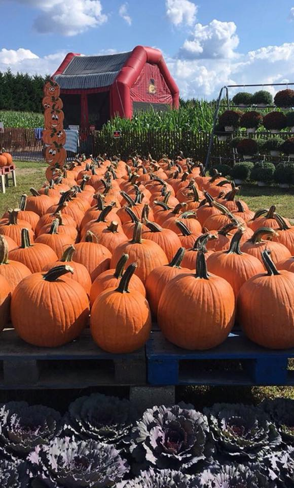 Take a hayride to the pumpkin patch and pick your perfect pumpkin! Return to the pavilion where you can have lunch or a snack. Stop in the Learning Barn, play in the Play Yard, walk through the Corn Maze, and visit with the animals!