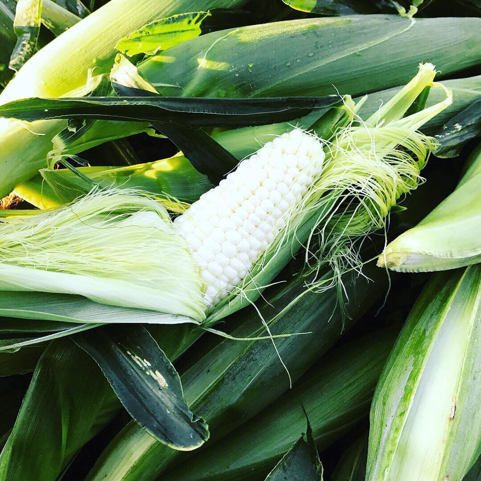 - OUr own Jersey Sweet corn
