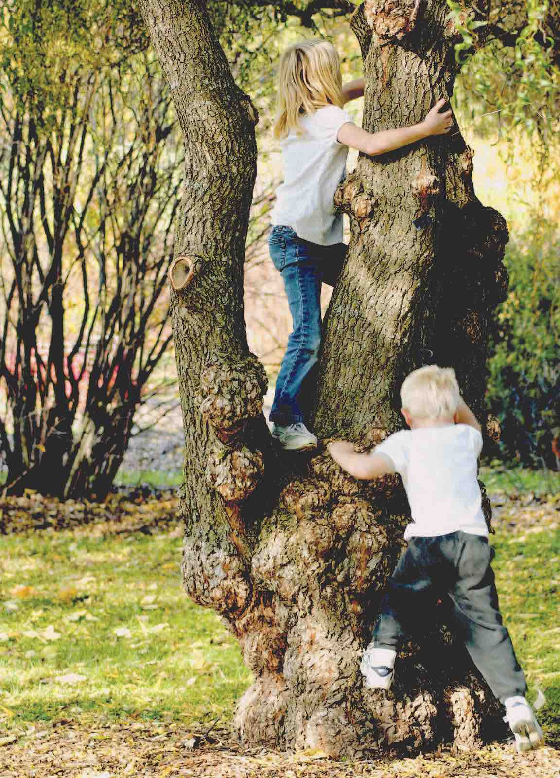 best way to learn about a tree-sobel.jpg