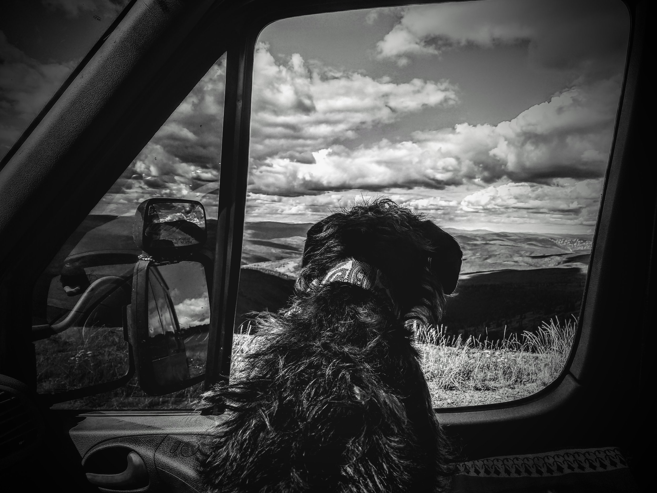 """A dog's view from the """"Top of the World"""" Highway...how many smells are within his reach?"""