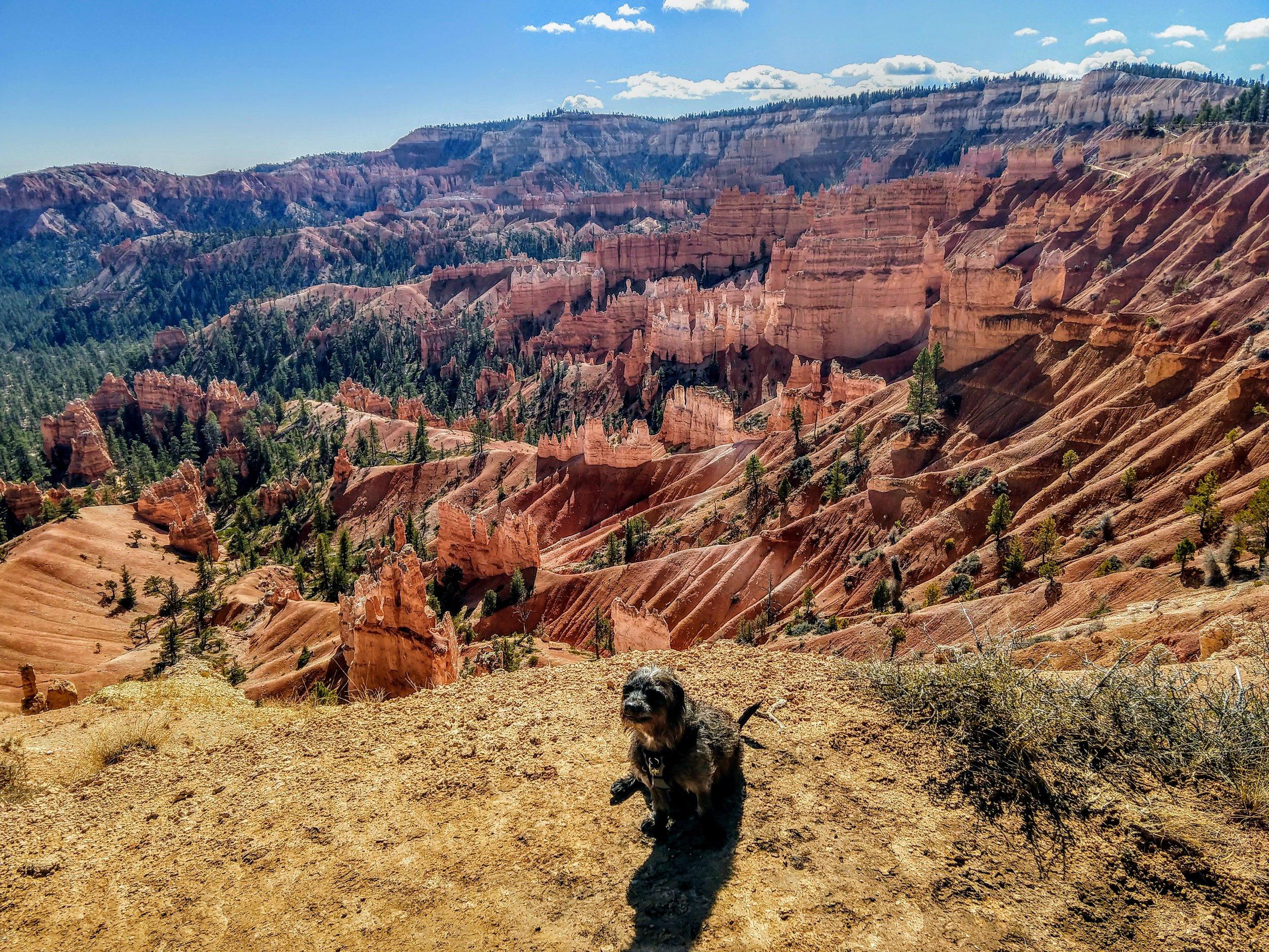 Hoodoos at Bryce Canyon, Utah.