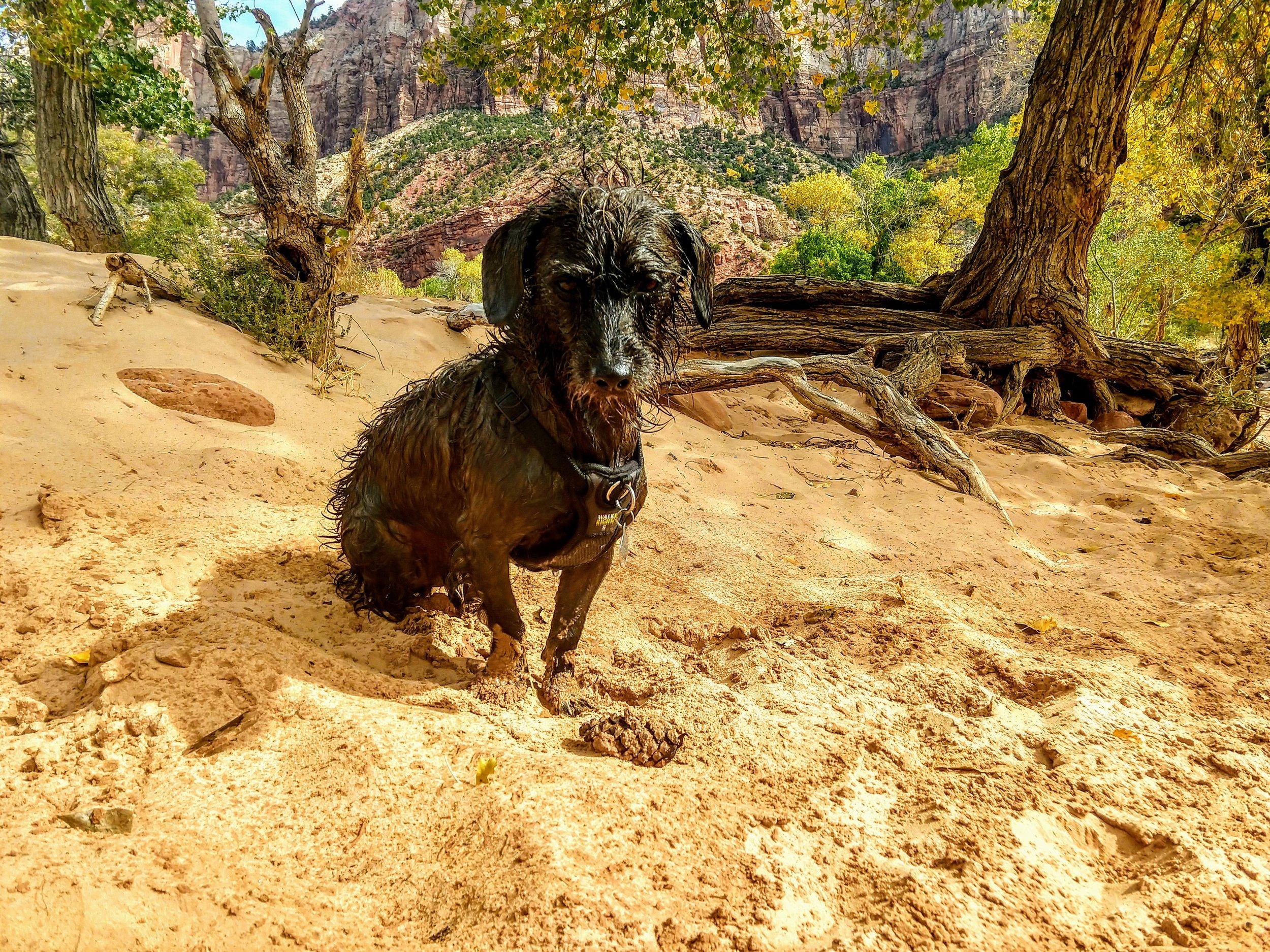Zion National Park, a regal stare down.