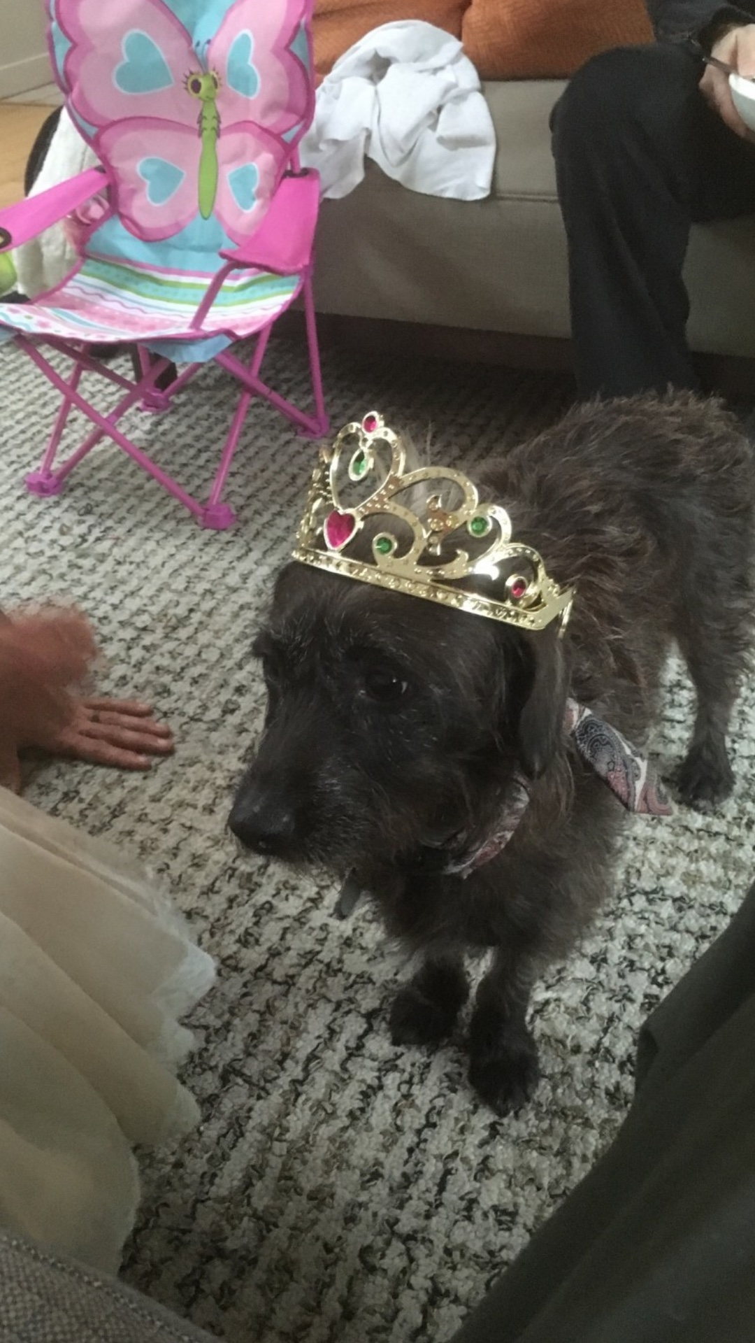 Queen for a day…this is a leftover from our stay in Denver, Co. Tiara, compliments of Mabel Magdovitz.
