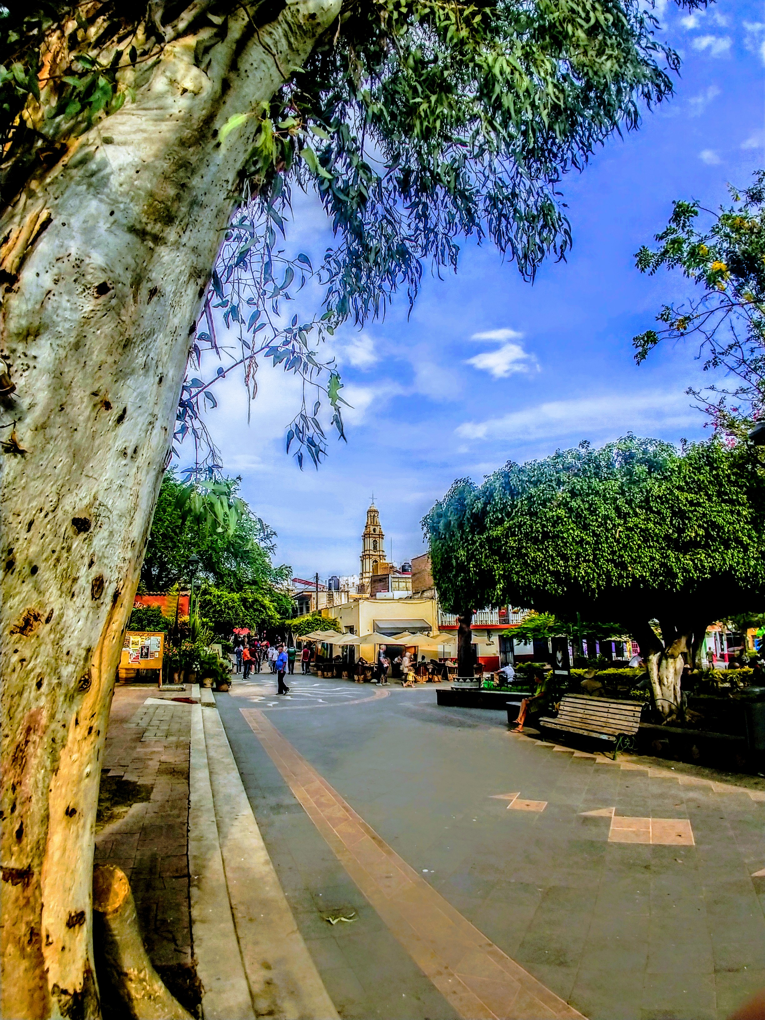 Pelé was desperate to chase something in this square. He briefly flirted with a soccer ball being kicked around by some local kids, but ended up settling for a flattened water bottle - Ajijic, Mexico
