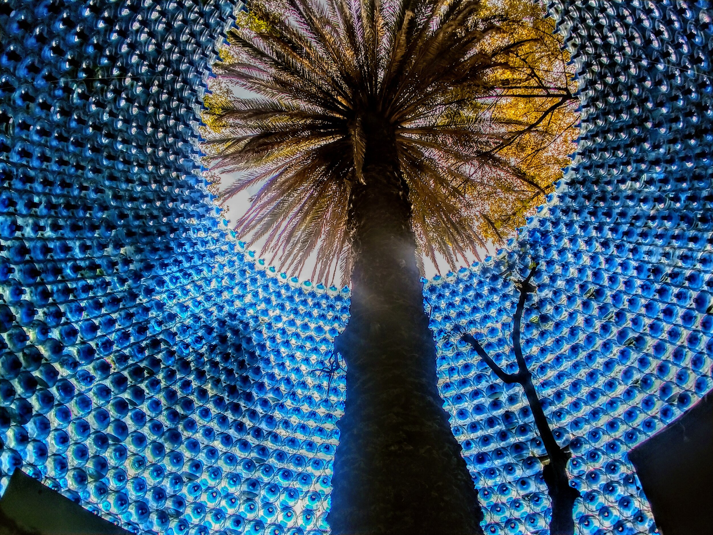 Made of recycled bottles, the wall which surrounds this tree is quite beautiful. - Mexico City, MX