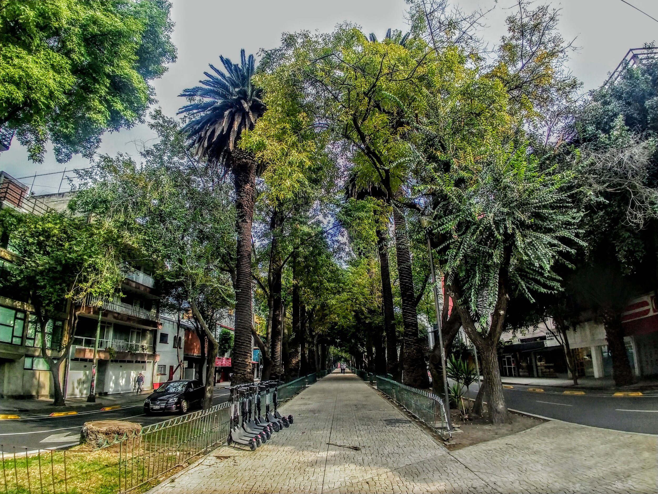 These beautiful walkways are all over the place in Mexico City.