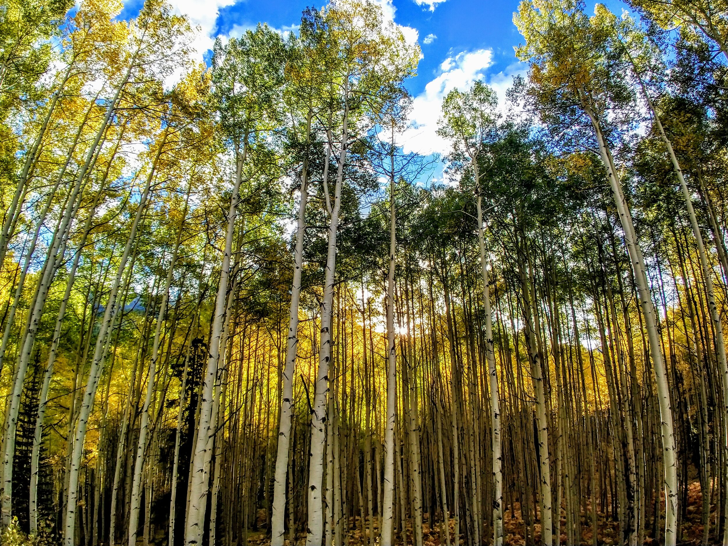 Somewhere in Colorado, the Aspen are waiting for you!