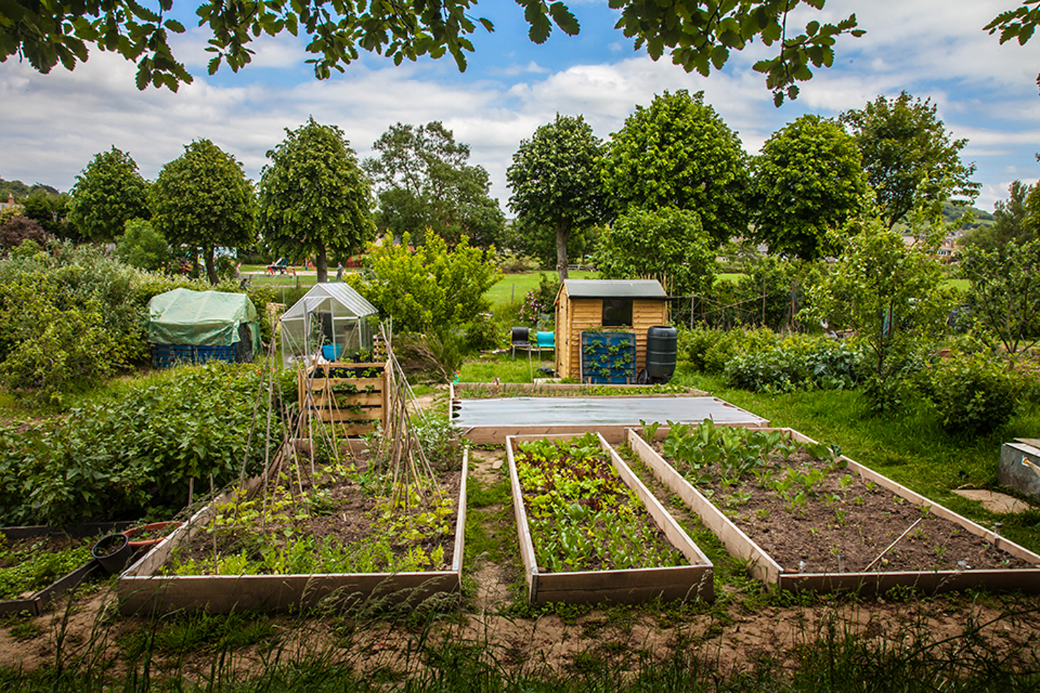 wide of the allotment.jpg