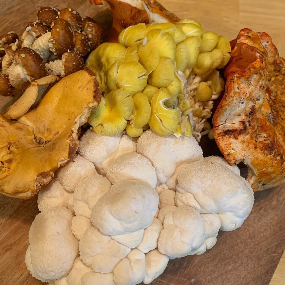 Photo Credit: The Magical Mushroom Hub | [Lion's Mane, Chanterelle, Lobster, Chestnut]