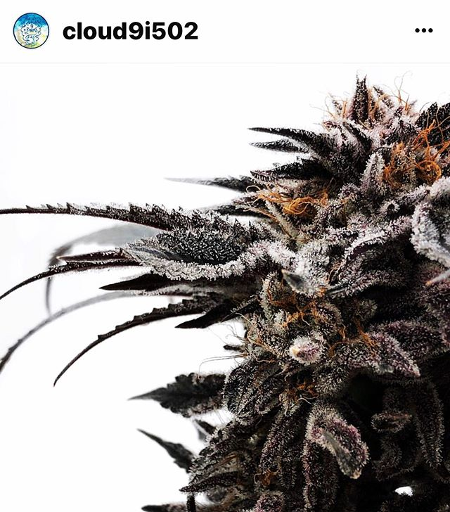 Freedom Friday with a chance of clouds💨 #LegalizeIt @freedom_markets #Legalize @cloud9i502 #Dank #Cannabis #420 #710 #SWED #21+ #MMJ #Herb #Ganja #Weed #InstaStoned #LocalBuds